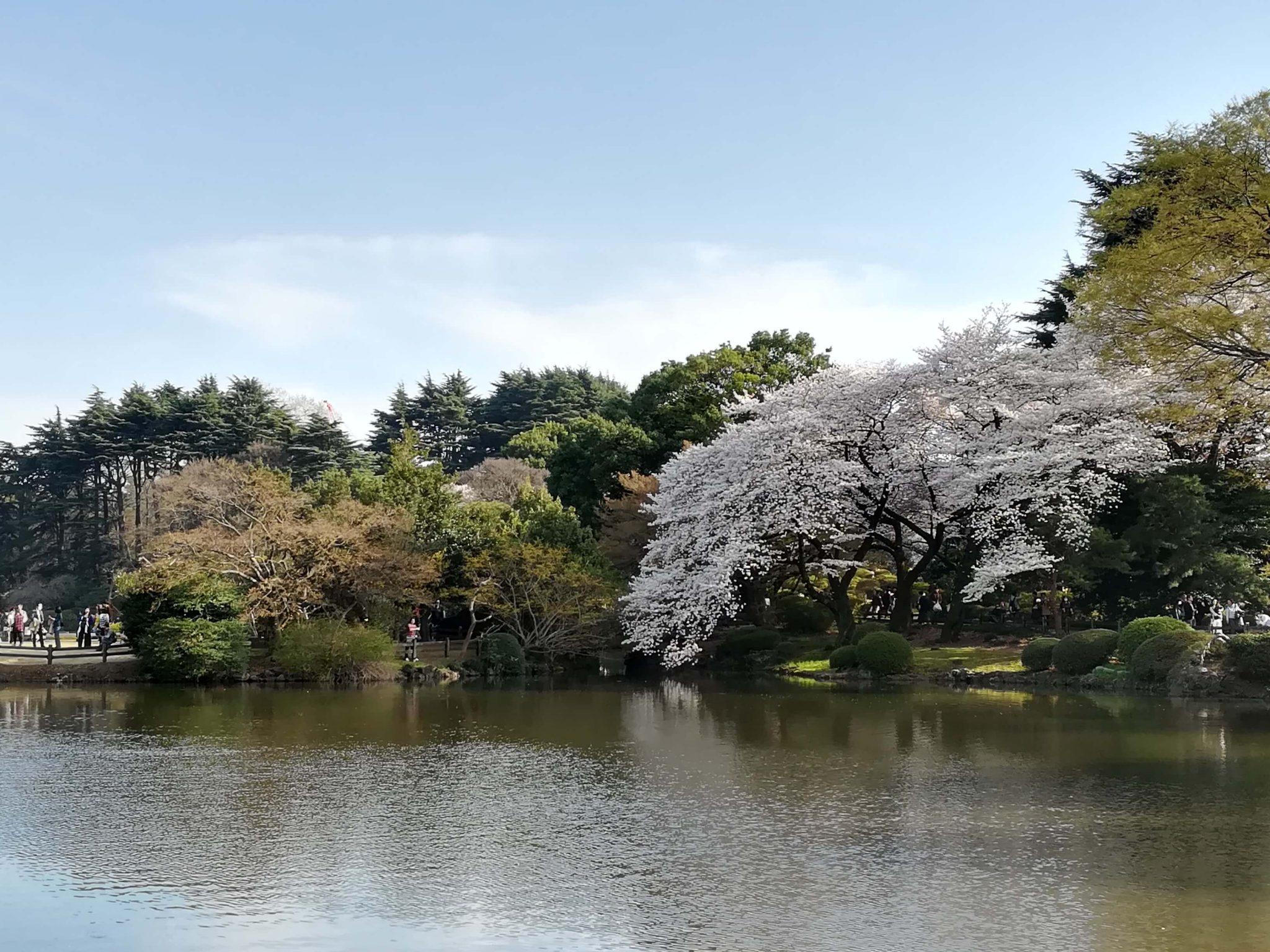東京の池や湖に関する画像をまとめています