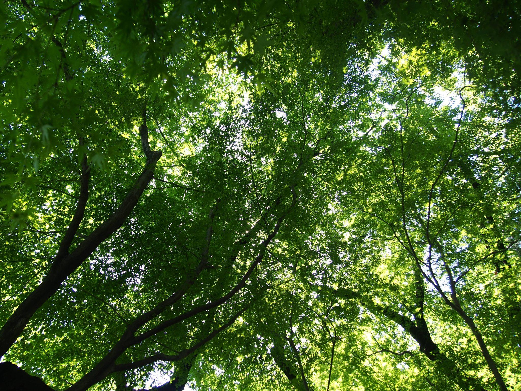 東京の木や森に関連した画像をまとめてます